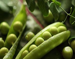 Distributor of Produce